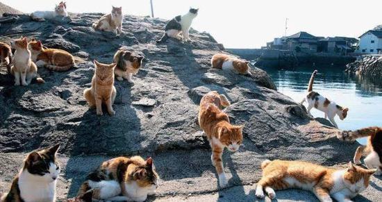 这些地方都是喵星人的领土猫在地球上的七大殖民地